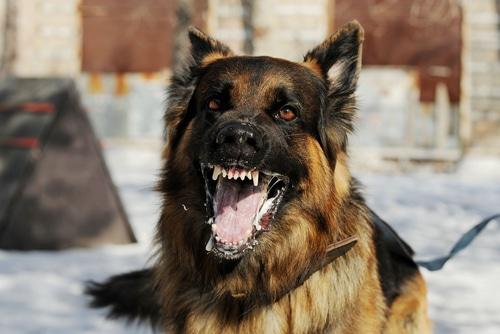 Dog Bites Still A Major Concern In Michigan
