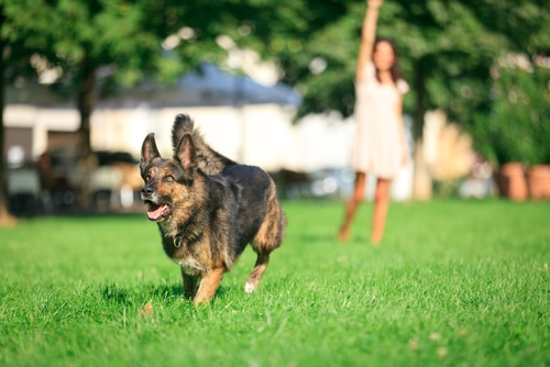 Best Places to Take Your Dog in Metro Detroit