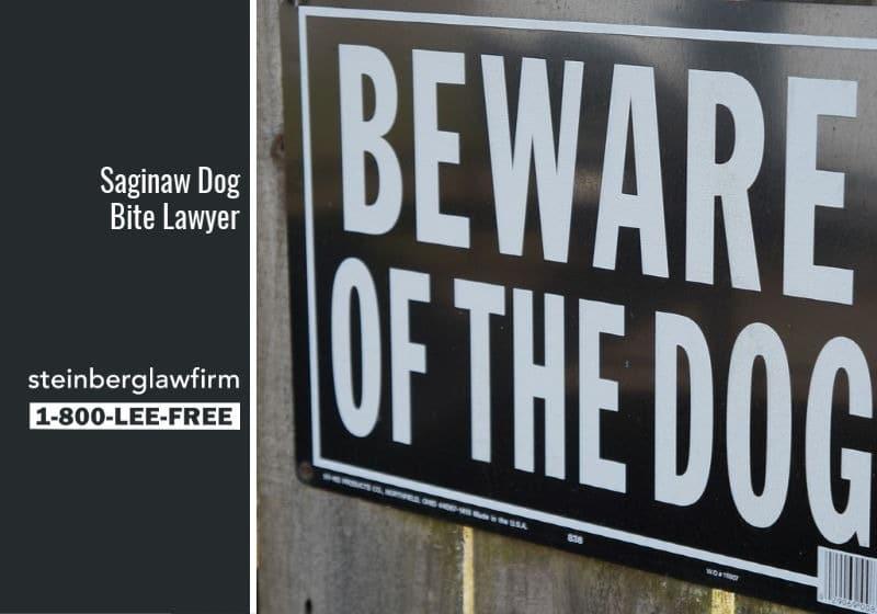 Saginaw Dog Bite Lawyer