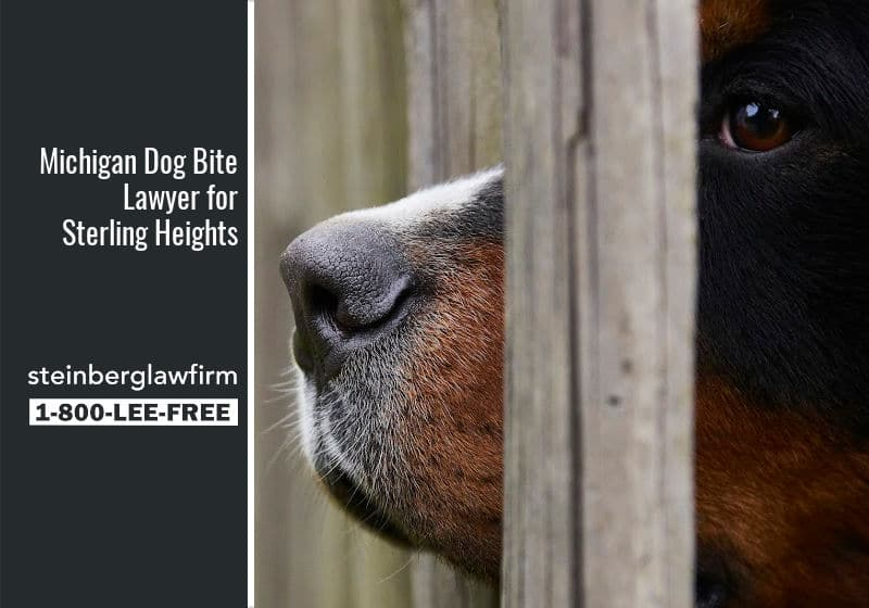 Dog Bite Lawyer Sterling Heights